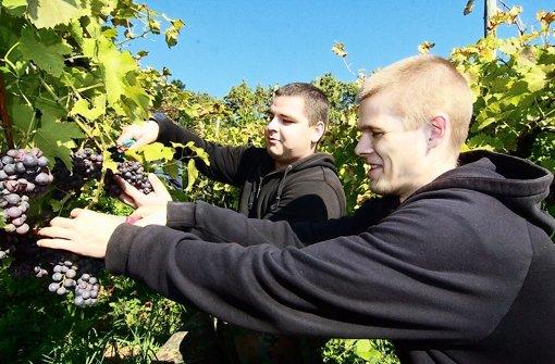 Das Weinberg-Projekt wird von den Naturfreunden genauso unterstützt wie die Arbeit der Mobilen Jugendarbeit. Foto: Friedel